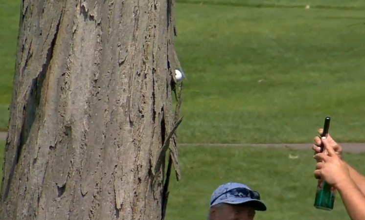 Kevin Streelman's ball got stuck in a tree.